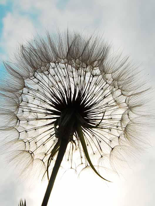 flower-head